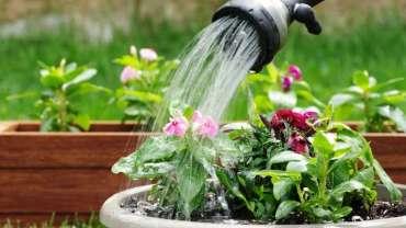 arrosage-plantes