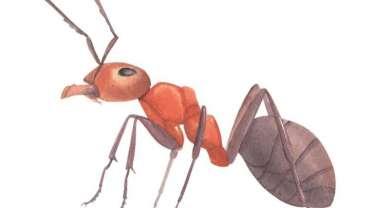 astuces-anti-fourmis