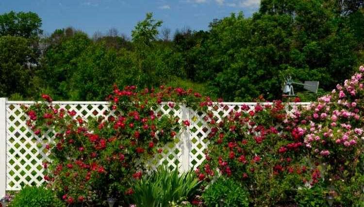 pour-cloturer-son-jardin